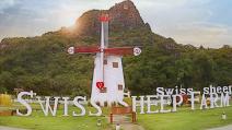 Swiss Sheep Huahin